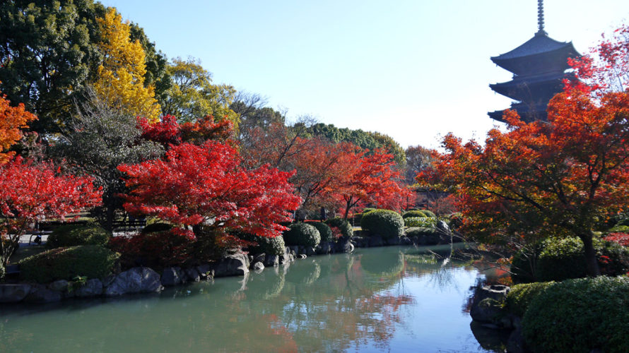 京都市南区、田中みほです!